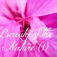 closeup nature picture